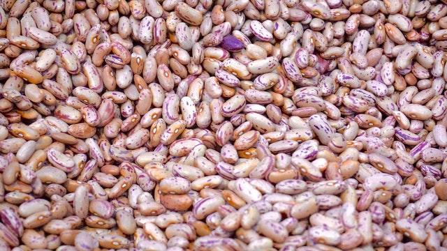 růžové fazole