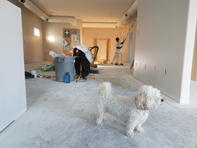 renovace bytu, pes